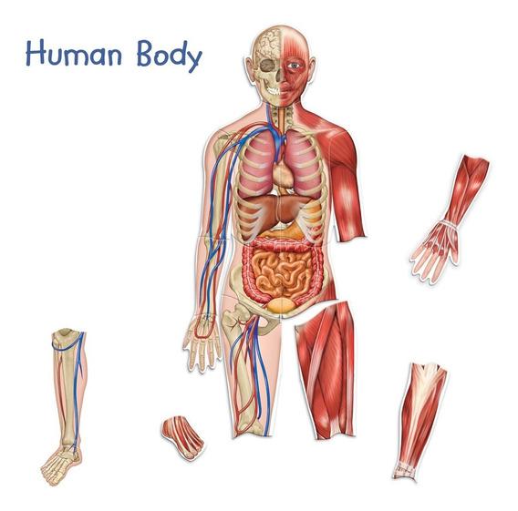 De Doble Cara Magnética Del Cuerpo Humano