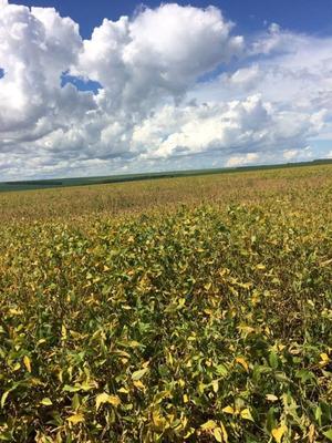 Fazenda A Venda Em Sonora - Ms (dupla Aptidão) - 1108