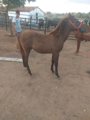 Imagem 1 de 5 de Cavalo,potro