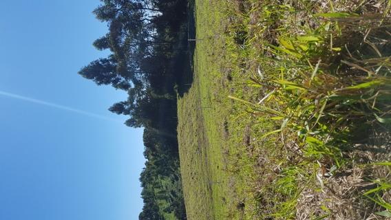 06- Terreno Proximo A Nissin Miojo