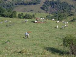 Fazenda Em Baependi Sul De Minas Com 131,63 Ha Toda Formada - 02 Casas - Com Luz E Muita Água. - 2910