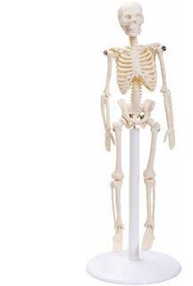 Esqueleto Humano Com 20 Cm - Modelo Anatômico Com Suporte
