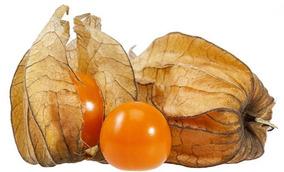 Physalis Fisalis Goldenberry Tomate De Capucho 50 Sementes