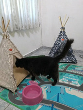 Hospedagem De Cães E Serviço Pet Sitter Para Gatos
