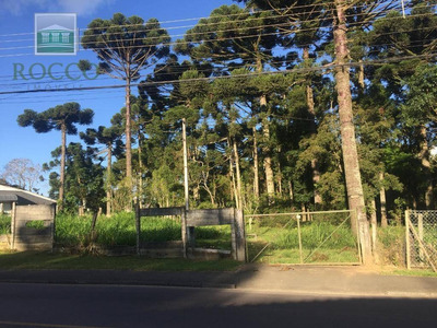 Terreno Para Alugar, 30000 M² Por R$ 2.000/mês - Barreirinha - Curitiba/pr - Te0034