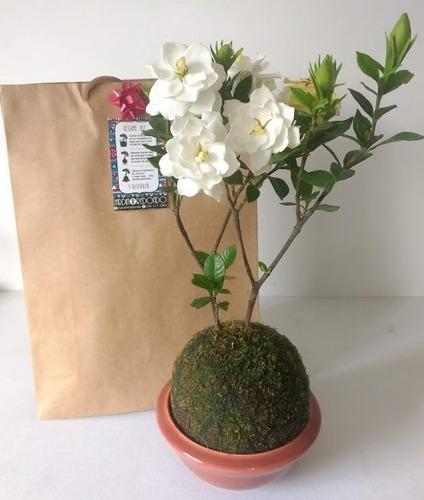Coj/ín de Espuma para jardiner/ía Rowan