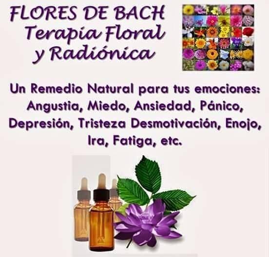 Flores De Bach Gotas Homeopaticas