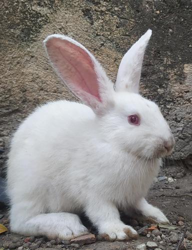 Conejos (3 Meses)