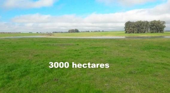 Fazenda Com 3000 Hectares Em Tacuarembó - Uruguai