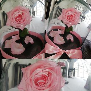 Rosa Preservada Mini