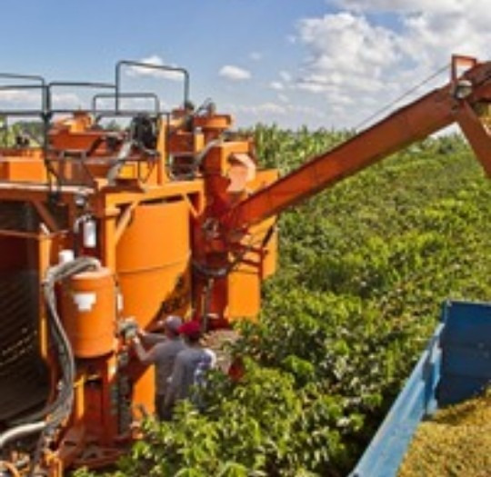 Fazenda De Café Para Investidores. 484