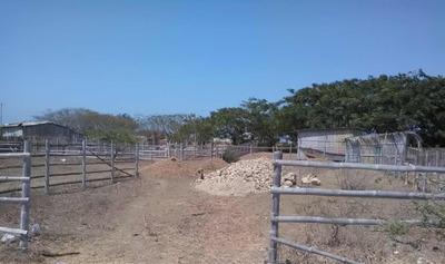 Vendo Terreno En San Pablo 250 Mts2 A 10 Minutos De La Playa