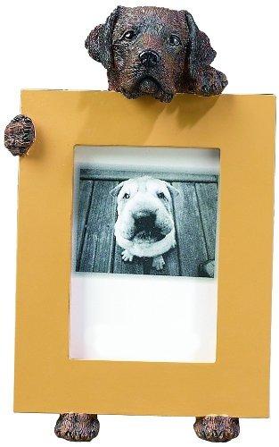 Chocolate Labrador Retriever 25 X 35 Marco