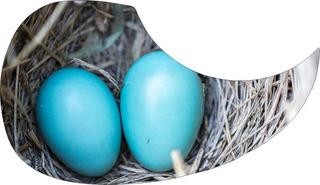 Escudo Palheteira Resinada Violão Aço Sônica Nest