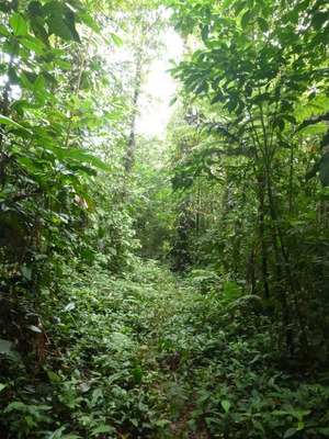 Finca Forestal O Para Conservacion 20 Hectareas