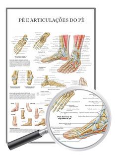 Mapa Anatomia Educação Física, Pé E Articulações 60x90 Cm