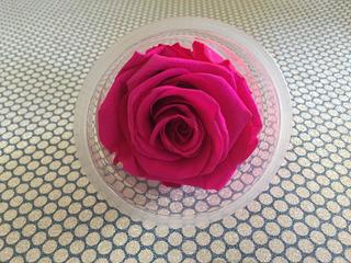 Rosa Eterna, Rosas Preservadas Duran 2 Años