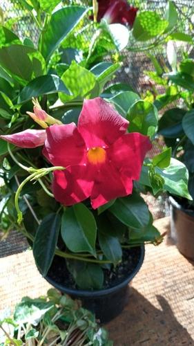 Imagem 1 de 1 de Jardinagem