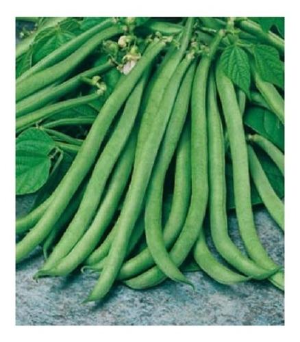 Poroto Enano Verde - Frijol - Judias (30)