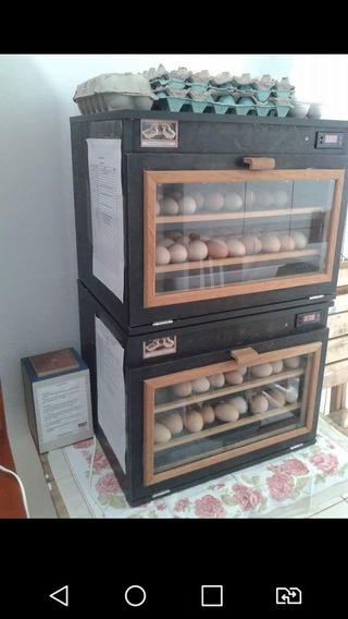 Chocadeira 80 Ovos Automática, Ar Forçado E Manual