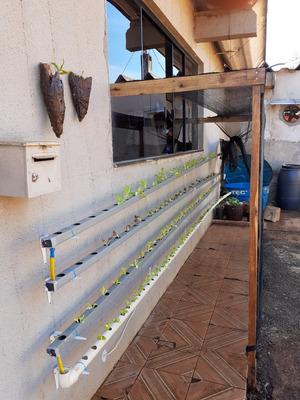 Hortas Verticais Estufas De Morangos