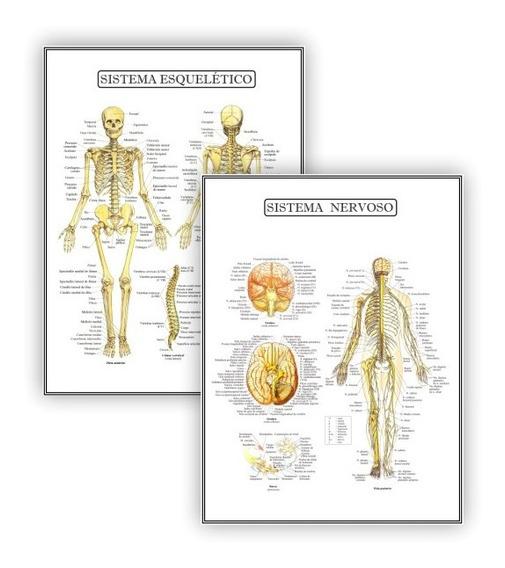Kit 2 Posteres Anatomia Med Fisioterapia Fisiologia 45x60 Cm