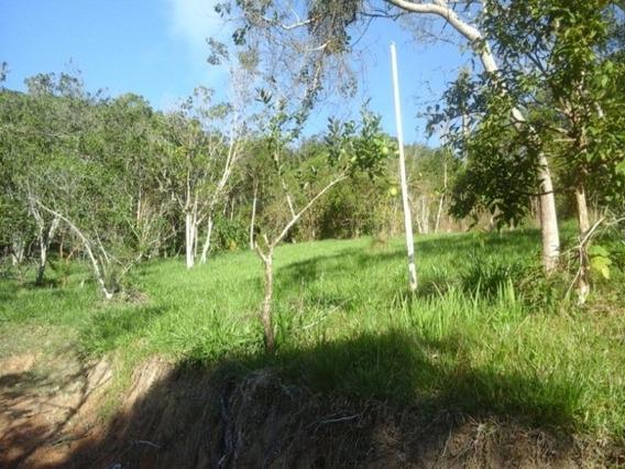 Chácara/ Sitio Em Balneário Camboriú Área 17.000 M² - T156 - 4853294