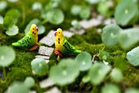 Miniaturas Para Terrario Papagaios 2 Peças