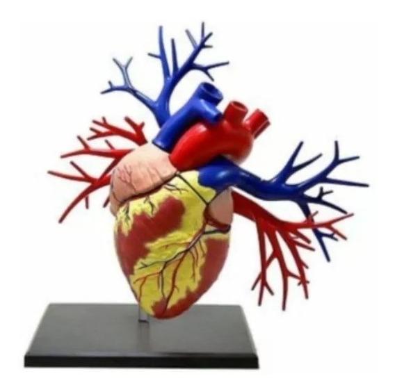 Coração Humano Anatomia Humana 4d Master