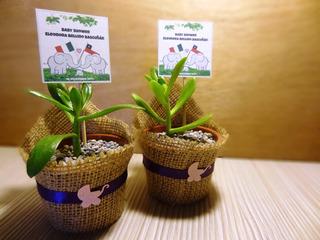 Recuerdos Bautizo Baby Shower Cactus Suculentas Para Regalos