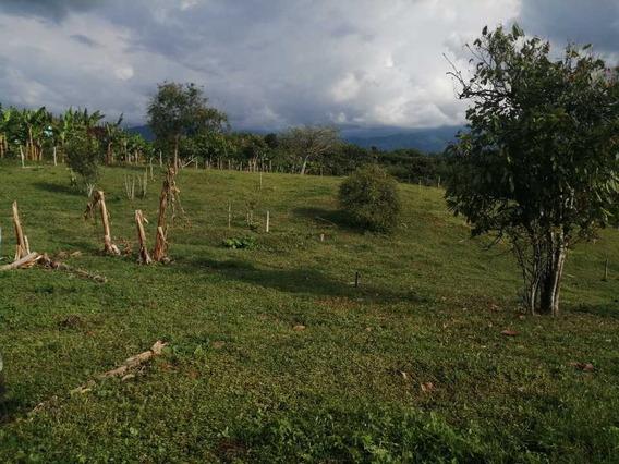 Finca Plana En Circasia Vendo