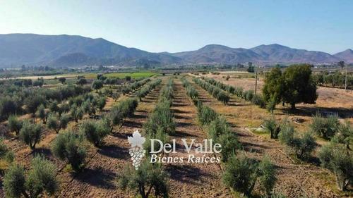 Imagen 1 de 7 de 2.8 Hectáreas Cerca De Vinícola El Cielo En Valle De Guadalu