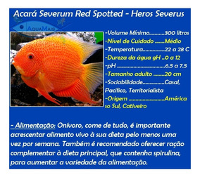 Severum Red Spotted 4-5cm - Heros Severus