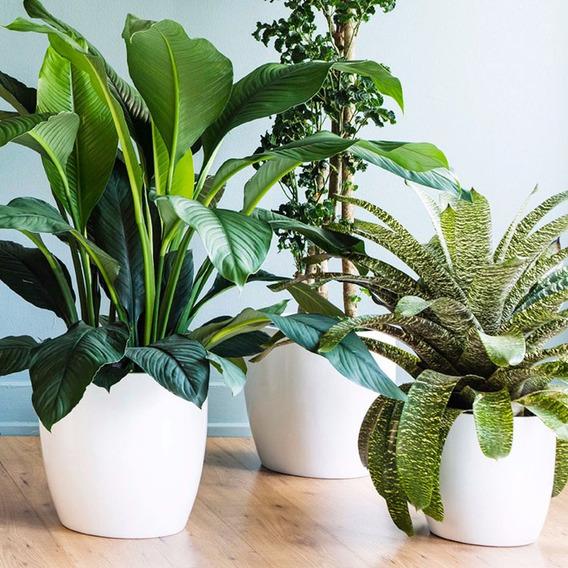Maceta Decoración Plantas Flores Interior 30cm