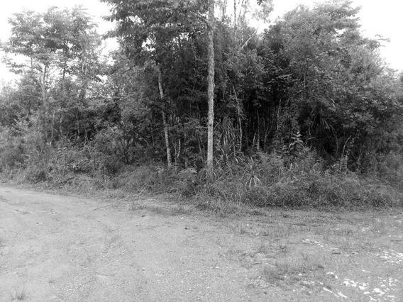 Terreno Em Bocaiuva Do Sul - Te00017 - 32180990