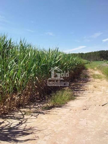 Sitio Com 14 Alqueires, Arrendado Para Usina Na Região De Santa Rosa Do Viterbo-sp - Si0112