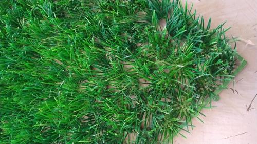10pz Follaje Artificial Sintético Verde 40x60cm Para Muro