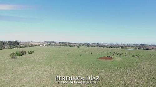 Campo De 32 Has Con Aptitud Para Cantera De Arena A 1 Minuto De San Carlos- Ref: 485