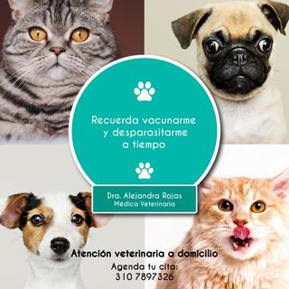 Vacunacion Perros Y Gatos