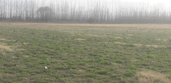 Finca En San Rafael 24 Hectreas Ideal Alfalfa Pastoreo