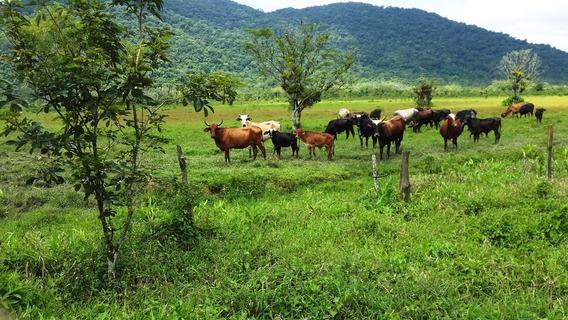 Fazenda Em Itanhaém - Diversas Nascentes E Cachoeira