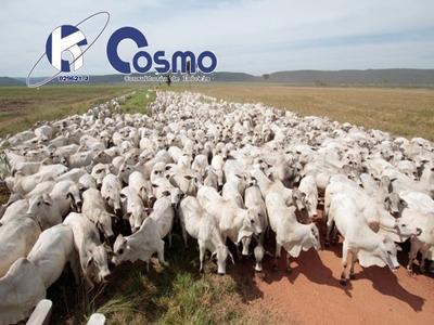 Fazenda, A Venda, Super Produtora Agrícola/pecuária - Mt - Fa00048 - 33303677