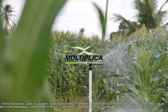 Fazenda Araguari, 83 Ha, Milho, Tomate, Pepino, Irrigado - 143