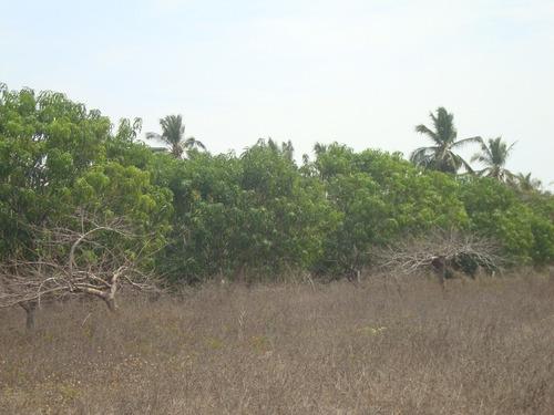 Imagen 1 de 5 de Terreno En Playa Encantada Zona De Ejido El Podrido