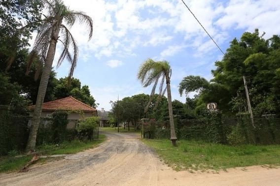 Sítio Em Lami Com 4 Dormitórios - Mi17481