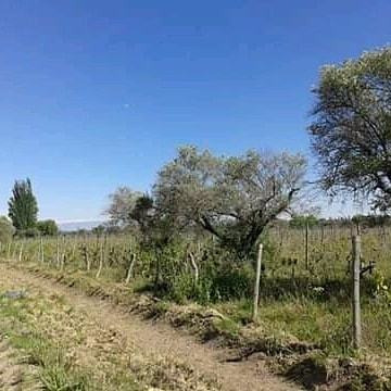 7 Hectareas ( Barriale. Mendoza )