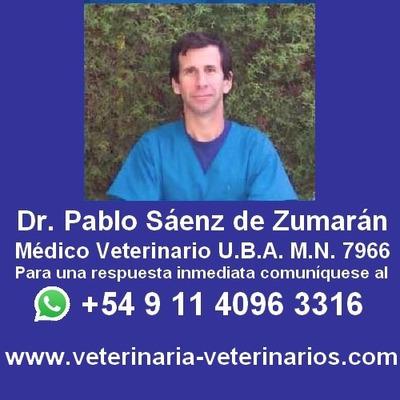Veterinario, Veterinarias Eutanasia En Perros Y Gatos,