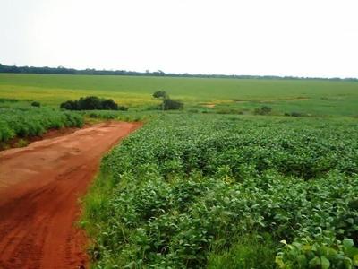 Fazenda Em Caseara - To, Dupla Aptidão - 287