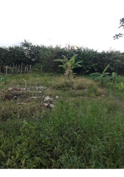 Sítio / Chácara Para Venda Em São Luís Do Quitunde, Zona Rural - Fz - 099_1-1427494
