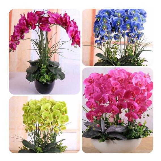 Kit 300 Sementes Flor Orquídea Exóticas Raras/p Mudas